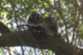 sid in tree