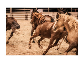Bill Pickett Black Rodeo