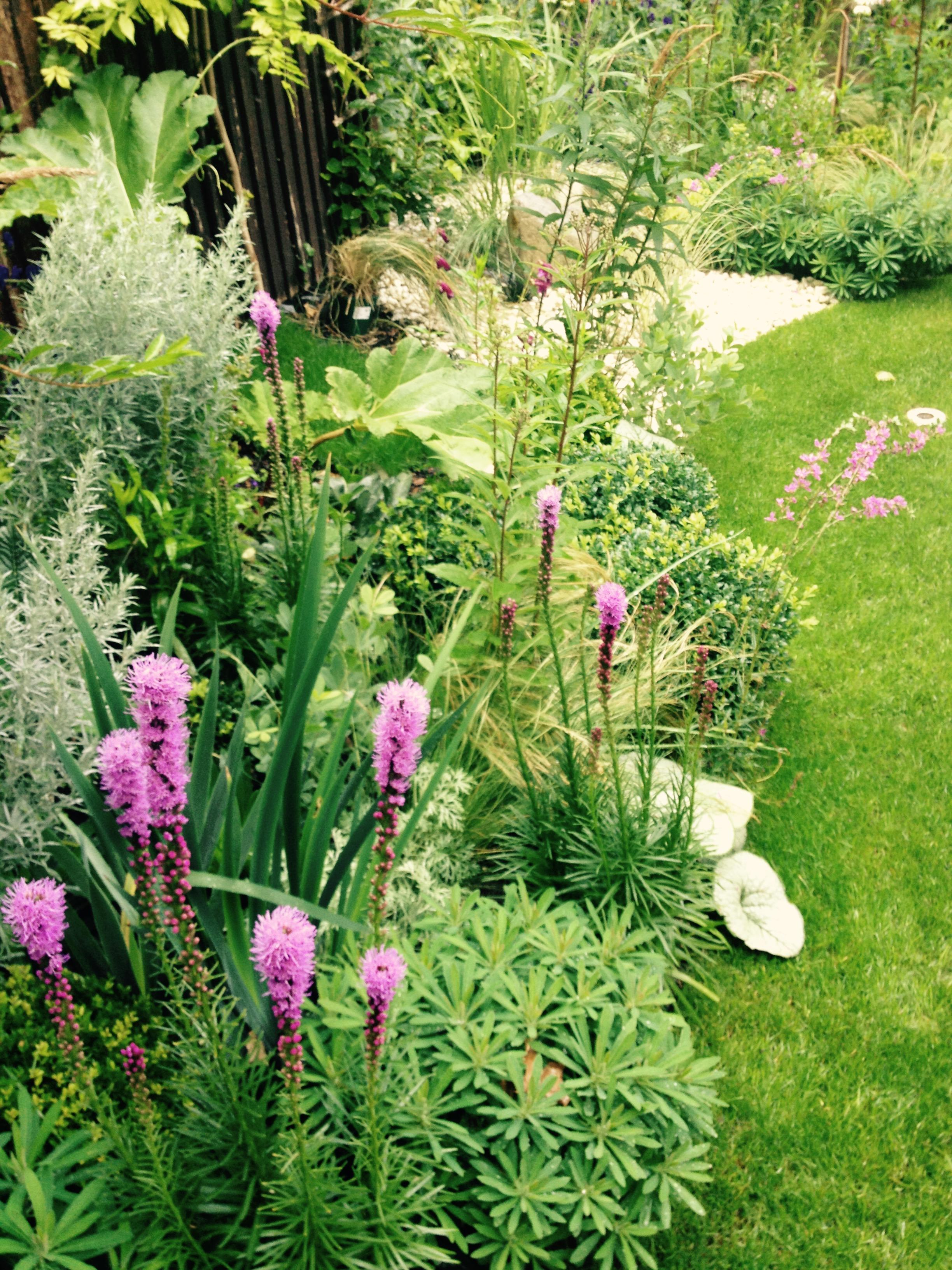 SydHill1- Lush & Fern Garden Design