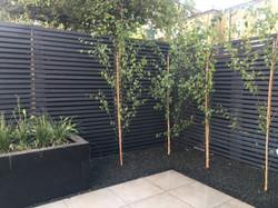 Silver birch lining corner