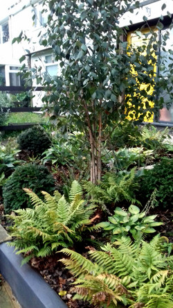 Woodland front garden carpeted with