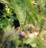 Things to do in a garden on a rainy day