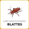 Lutter contre les blattes et les cafards