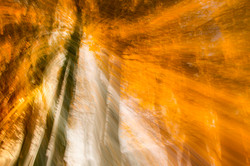 Lichtstrahl im Herbstwald