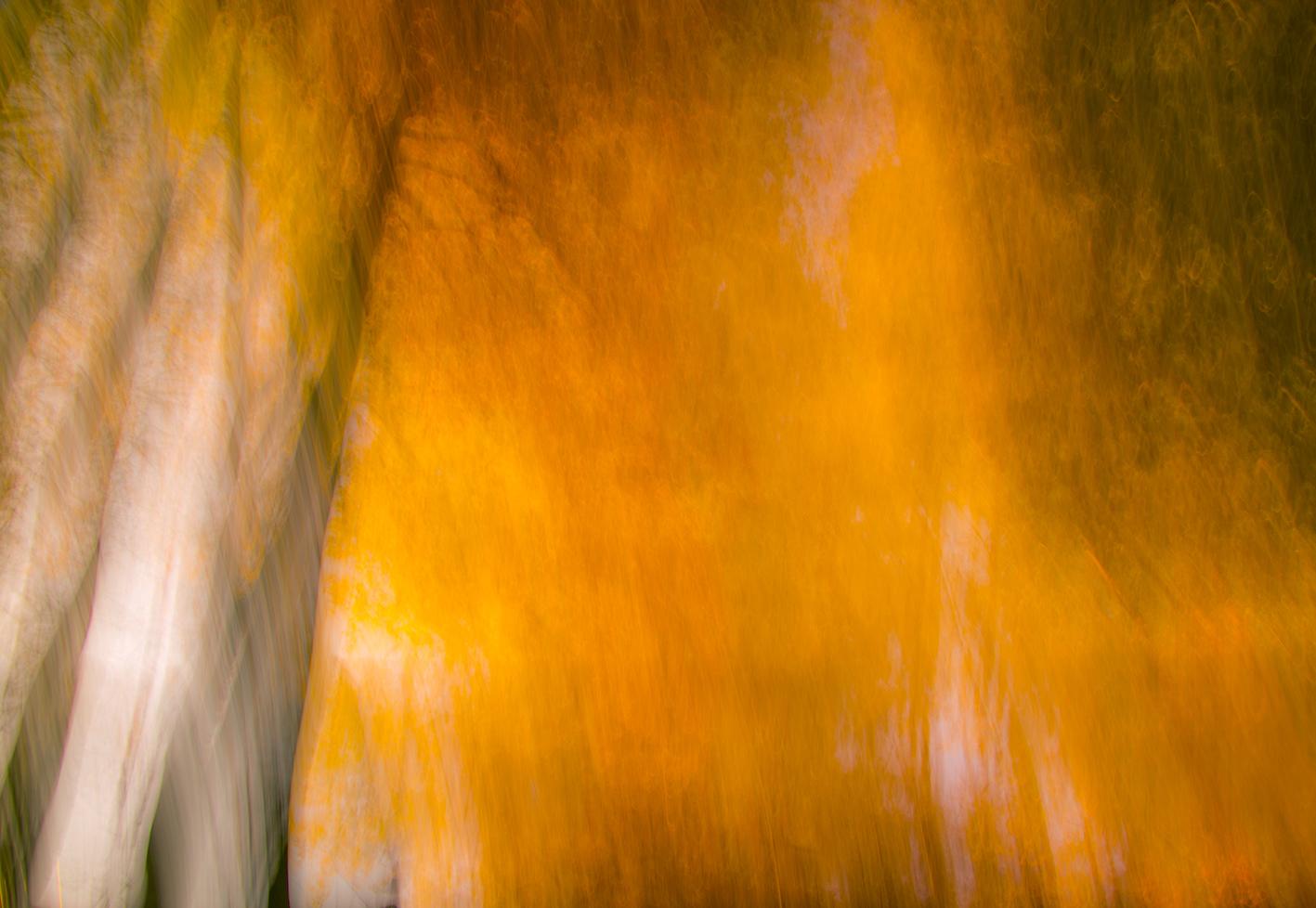 Fallendes gelbes Laub