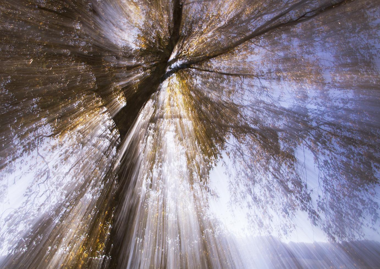 Baum im Tageslicht