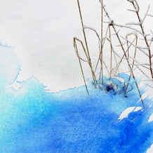 Gräser blau
