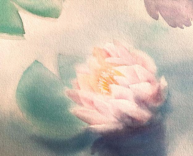 Aquarell Seerose.jpg