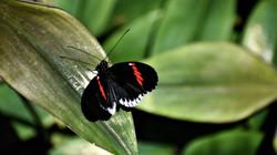 butterfly2sl