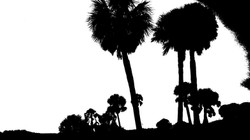 Palms aff