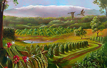 Idealic Hawaii Coffee Farm