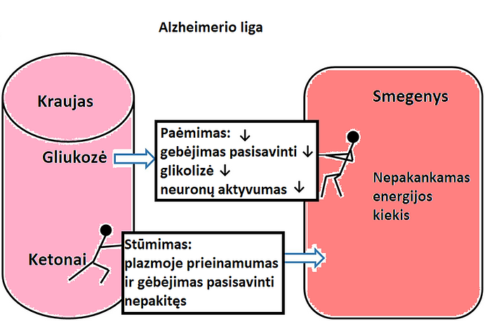ketonai ar gliukoze smegenims.png