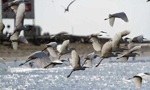 aves-en-cartagena_1541289_20190421112032