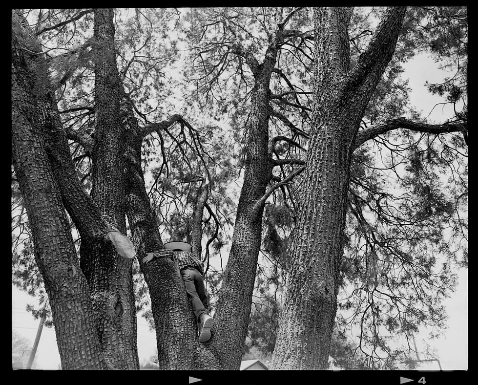 web_kid_tree.jpg