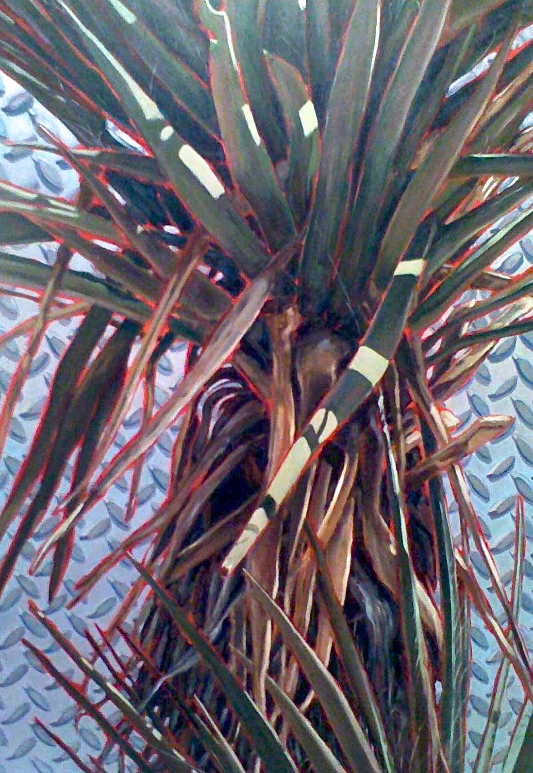 Inorganic (Yucca and Metal)