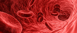 Blood-cells-1.png