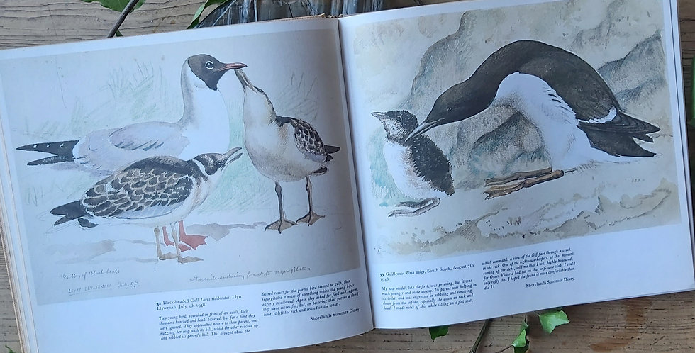 Sketches of Bird Life - C.F. Tunnicliffe