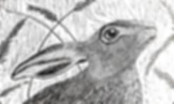 Meadow Hare clean.jpg