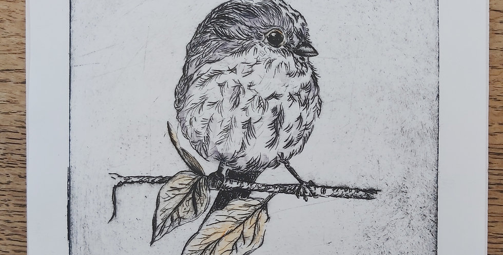 Longtailed Titmouse - drypoint etching