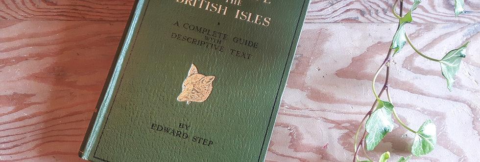 Animal Life of the British Isles - Edward Step