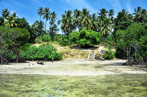 Mangrove Pemba.jpg