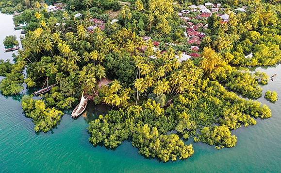 Mangrove Pemba 2.jpg