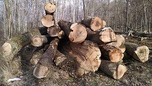 Hardwood log pile, timber