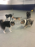 Doggy Daycare Woofdorf Astoria The Woof