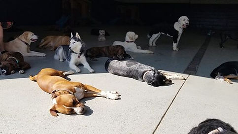 Lakewood Ranch Doggy Daycare 24/7 Staff on site 100% of the time.  No kennels