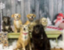 Dog Boarding Racine, WI