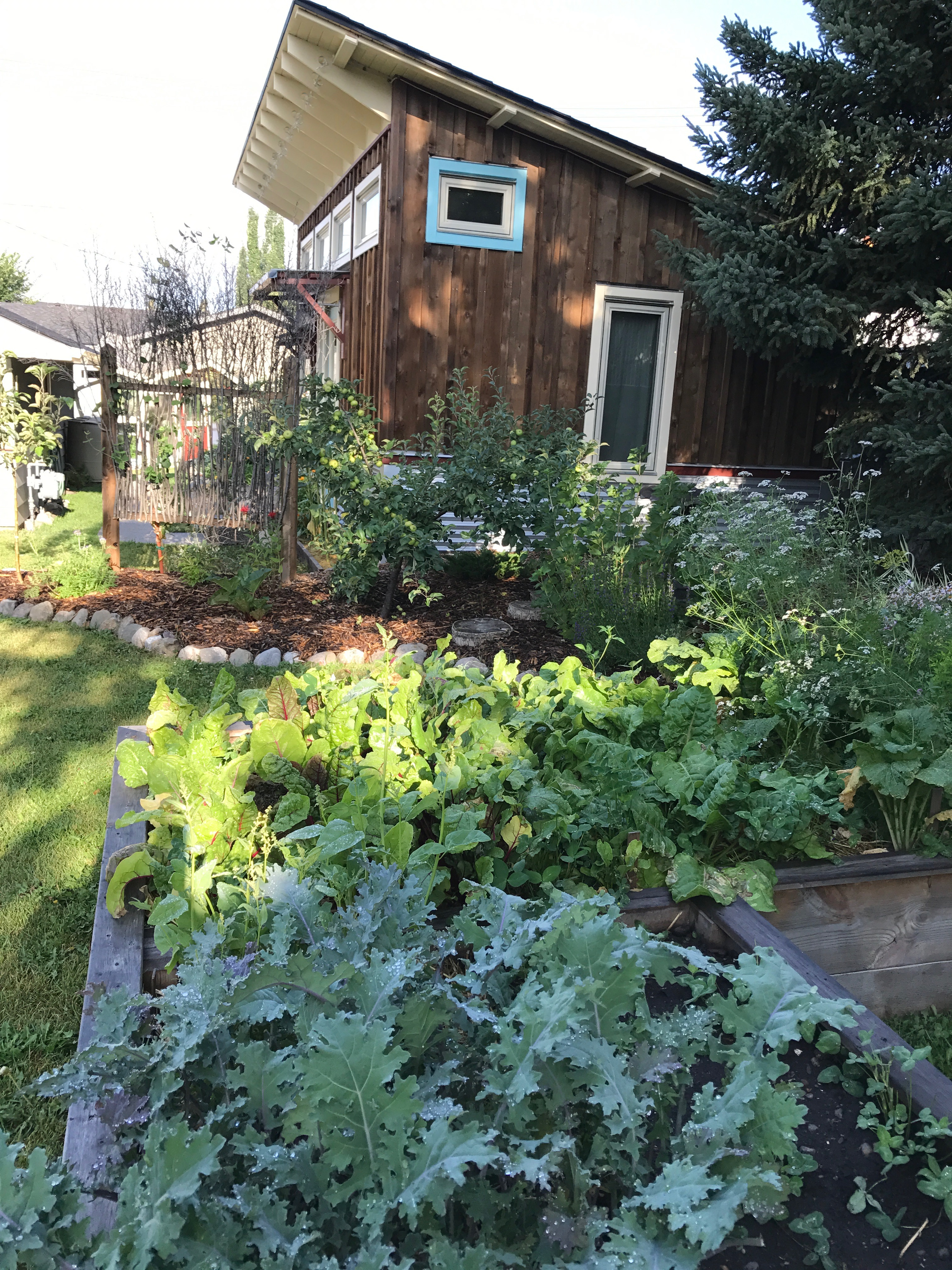 Kale, chard, etc. in raised bed