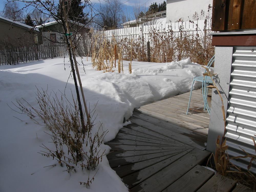 deep snow on garden