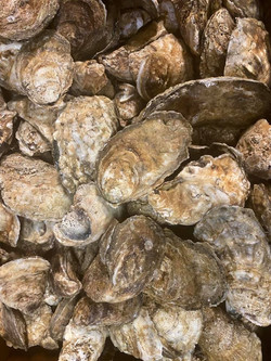 Oyster Singles
