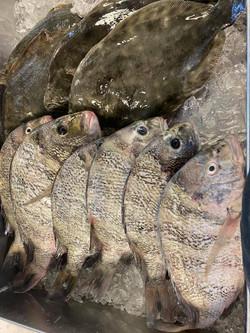 Sheep Head Flounder