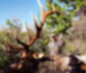 Trophy Colorado and Utah Elk Hunts