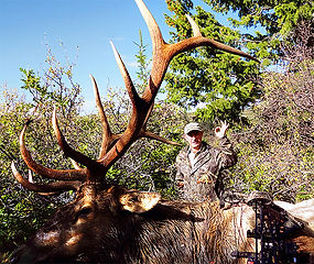 Trophy Colorado and Utah Elk Hunts