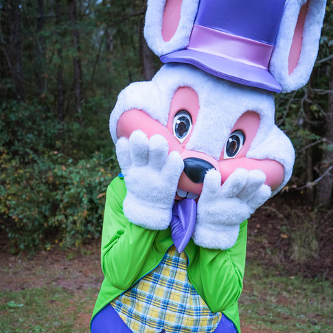 Easter Bunny for Hire