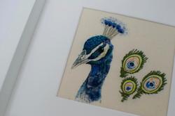 Peacock main NWM