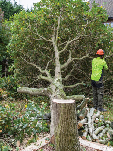 Specialist Tree Surgery Service in Rotherham