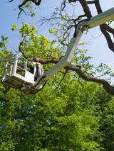 The Highest Level of Tree Surgery