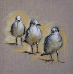 """""""So Three Gulls Walk into a Bar..."""""""