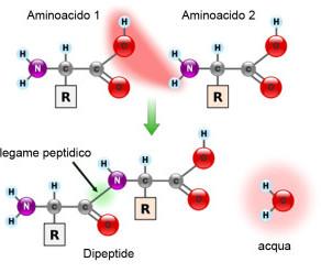Amino acids. Part I