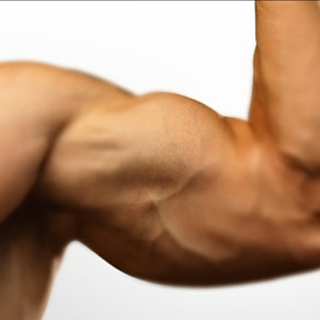 Levers and muscular actions