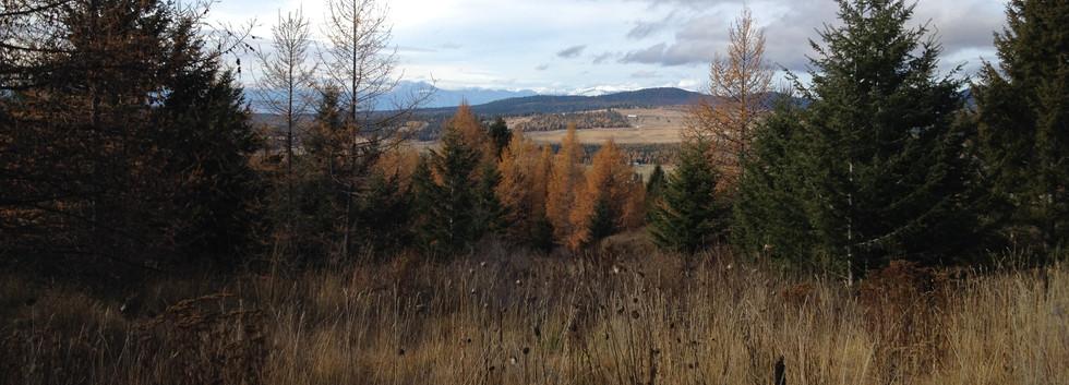 Fall time at Wheatgrass