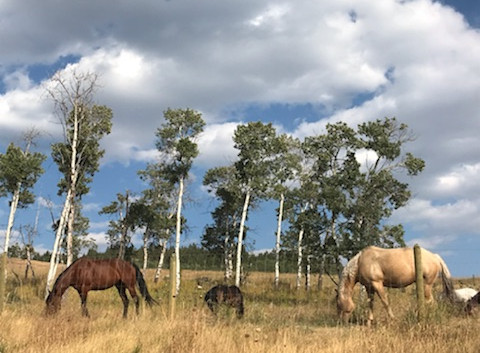 Horses from the neighboring farms