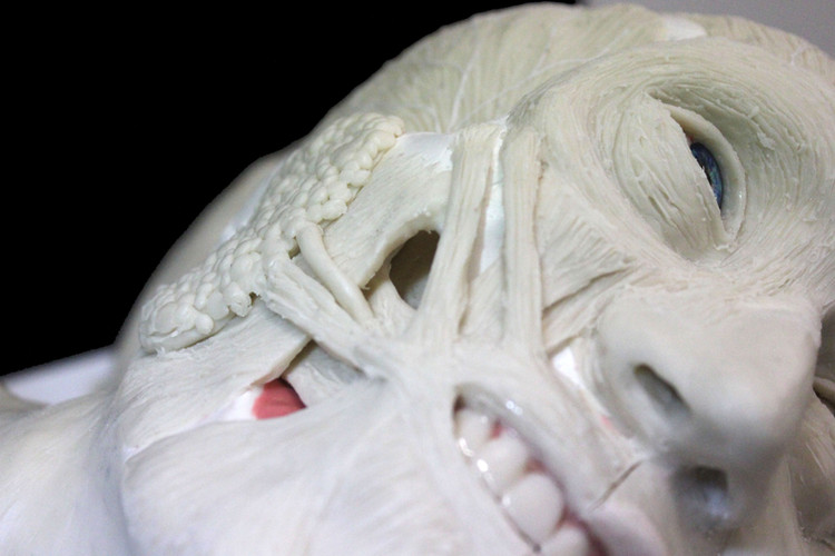 Wax Anatomy