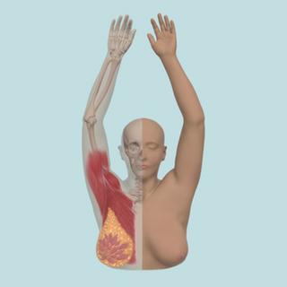 CT Scan Data