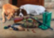 oil painting, dog portrait, labrador, springer spaniel, painting