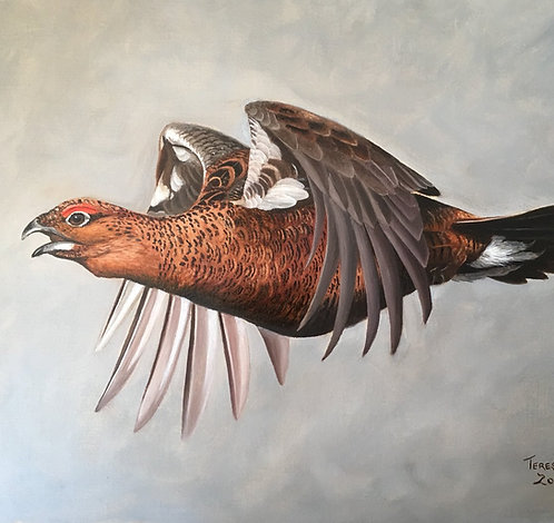 Red Grouse Flying Study