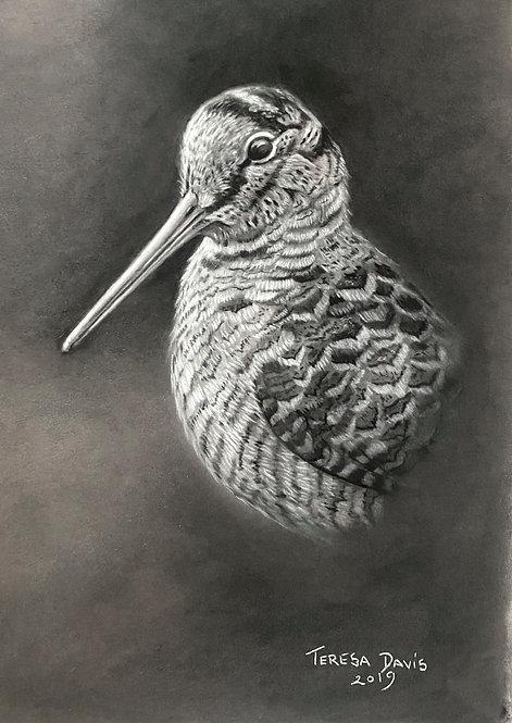 Woodcock Charcoal Drawing
